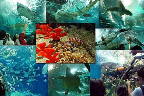 Shanghai Ocean Aquarium