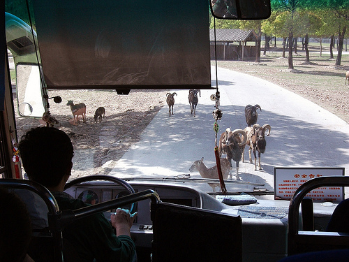 Shanghai Wild Animal Park_bus
