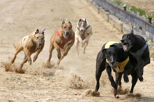 Shanghai Wild Animal Park_dogs race