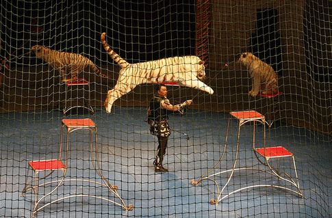shanghai circus world03